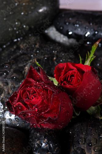 Fototapety, obrazy: Rosenblüten auf Steinen