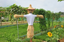 Straw Scarecrow At A Vegetable Farm