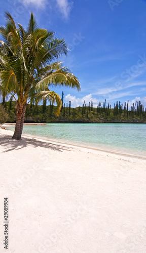 Photo sur Aluminium Caraibes Ile des Pins - Nouvelle Calédonie