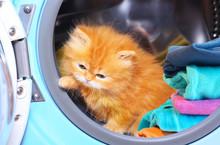 Red Kitten In Open Washing Mac...