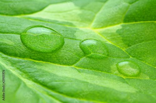 Poster Vegetal Gouttes d'eau macro sur une feuille