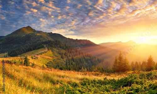 Stampa su Tela  Summer landscape in the mountains. Sunrise