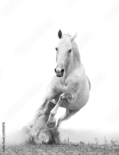 Foto auf Acrylglas Bestsellers white horse