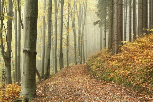 Papiers peints Foret brouillard Mountain trail in the beech forest on a foggy autumn day