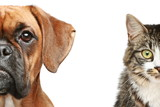 Fototapeta Dogs - Dogs and cats. half of muzzle close up portrait