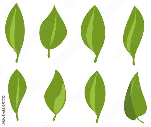 Fototapeta grüne Blätter obraz na płótnie