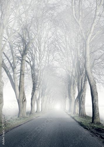 Allee | Nebel