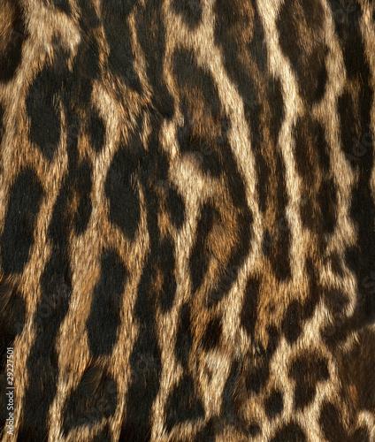 peau de léopard royal Tableau sur Toile