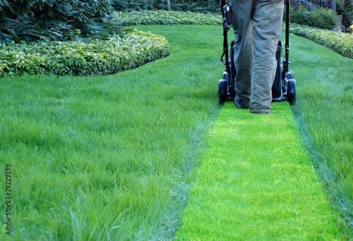 Photo sur Toile Olive lawn maintenance company