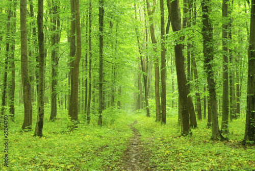 Photo Stands Road in forest forest