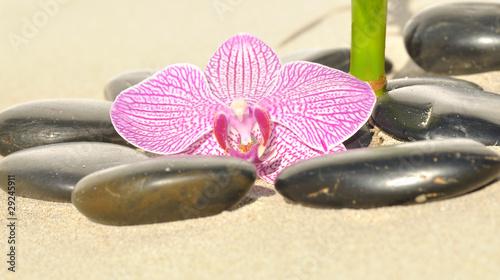 Photo sur Plexiglas Zen pierres a sable Petit jardin zen