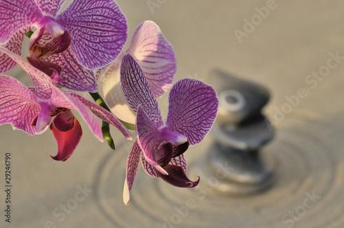 Photo sur Plexiglas Zen pierres a sable Orchidée et spiritualité, ambiance zen