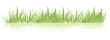 Green Grass In A Row