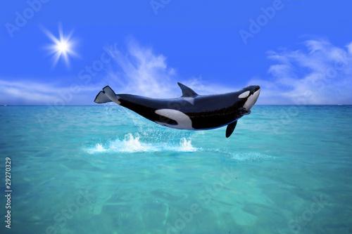 Fotografie, Obraz  Killer Whale