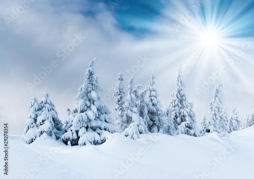 zimowe-drzewa