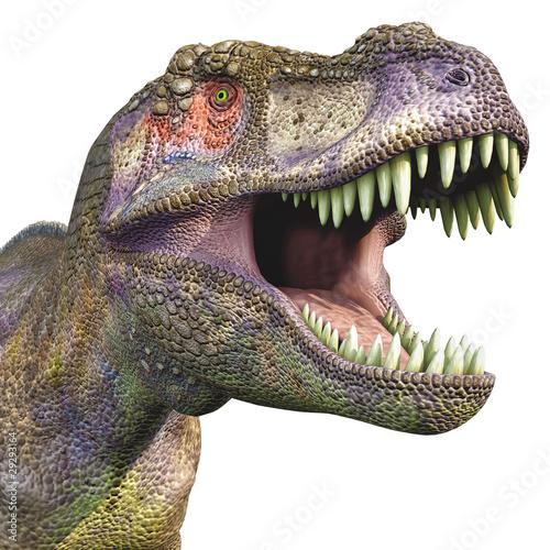 tyrannosaurus big head close up Fototapeta