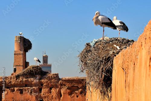 Staande foto Marokko Cicogne su antiche rovine a Marrakech