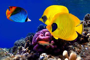 FototapetaUnderwater image of coral reef