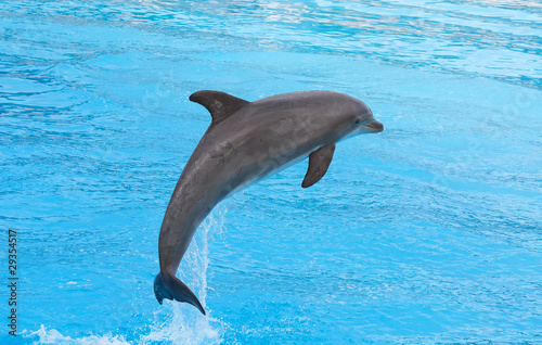 Staande foto Dolfijn Bottlenose dolphin