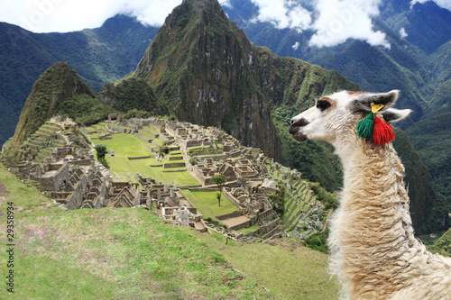 Photo Llama at  Lost City of Machu Picchu - Peru