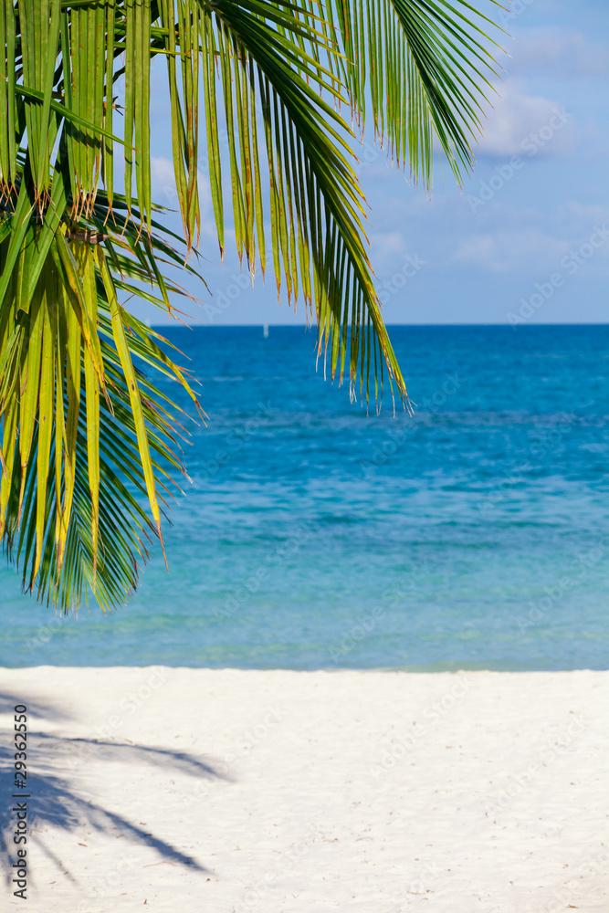 Foto Rollo Basic - Holiday Paradise