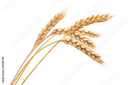 Fotomural Isolated bunch of wheat
