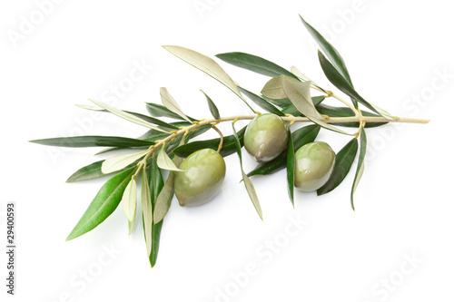 Fotografia  Ramoscello con olive