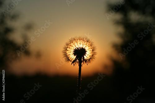 Zachód słońca - 29466321