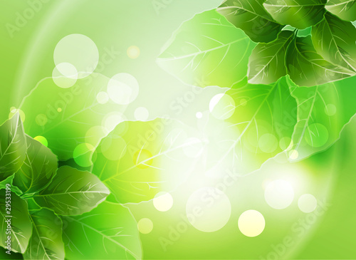 Summer or spring vector illustration for fresh design