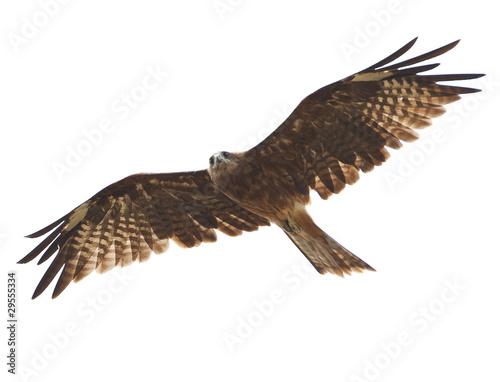 In de dag Eagle Black kite