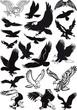 vector eagles collection
