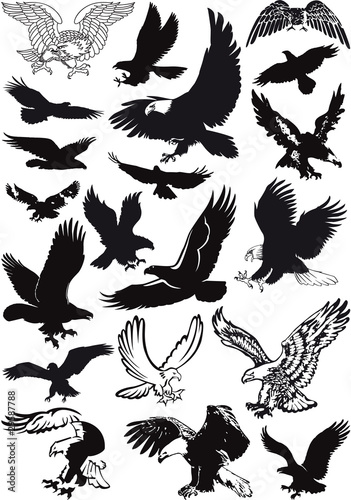 Photographie vector eagles collection