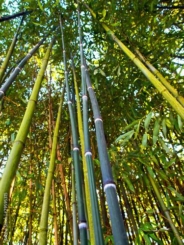Bambusrohr Kaufen Sie Dieses Foto Und Finden Sie Ahnliche Bilder