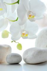 Obraz na PlexiOrchidee weiß