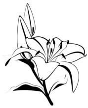 Beautiful Tropical Lillies