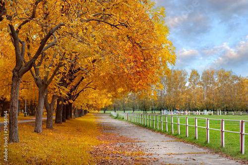 jesien-w-parku