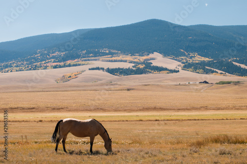 Photo sur Toile Elephant Horses grazing