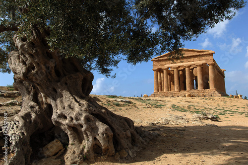 Fotografie, Obraz  agrigento valle dei templi, sicilia, italia