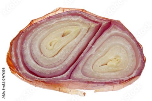 Fotografie, Obraz  Sliced Shallot Onion