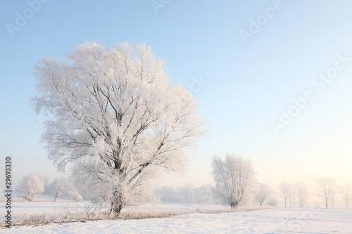 Foto-Leinwand ohne Rahmen - Frosty winter tree against the blue sky at sunrise (von joda)
