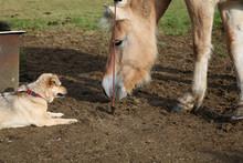 Mischlingshund Und Pferd