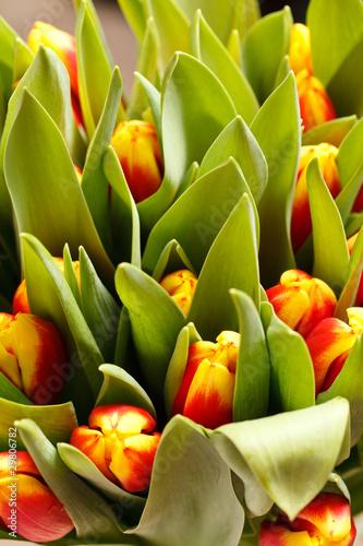 piekne-tulipany
