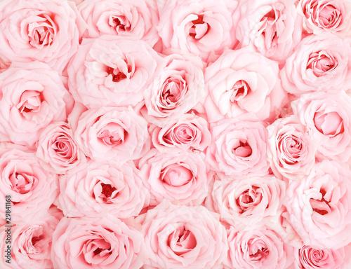 rozowe-roze-tlo