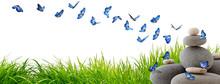 Très Beaux Papillons Bleus Vo...