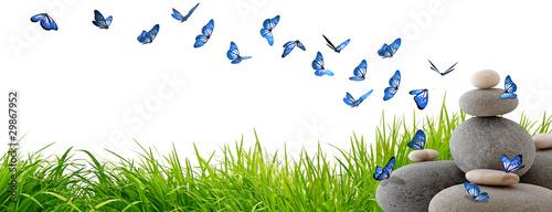 Poster de jardin Papillon Très beaux papillons bleus volant au-dessus de rochers