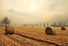 Hay Bale Or Sheaf In A Cold Day In Winter Agriculture