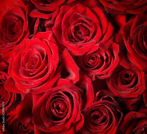Roses Background - 29943070