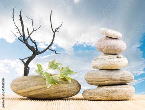 stos-kamieni-zielony-lisc-i-martwe-drzewo