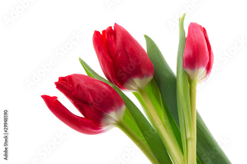 Foto op Plexiglas Tulp Red tulips