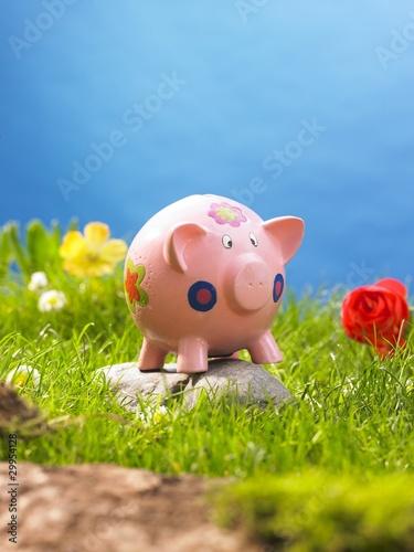 canvas print motiv - AR : schweinchen in der wiese